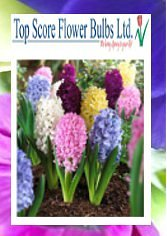 top score flower bulbs